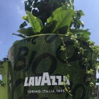 allestimenti_001_lavazza