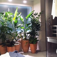 indoor_011_caccaro