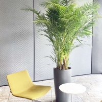 indoor_015_gioia
