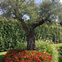 outdoor_047_cassina_giaridno